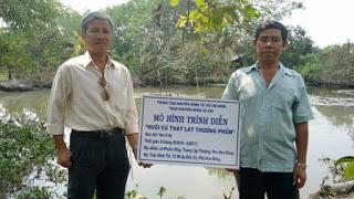 Nghề nuôi cá thát lát
